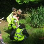 Pond dipping1 Y4 May 2017