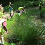 Pond dipping2 Y4 May 2017