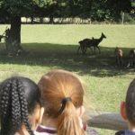 wildlife-centre-3